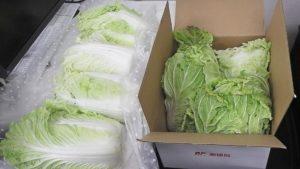 白菜が届きました!